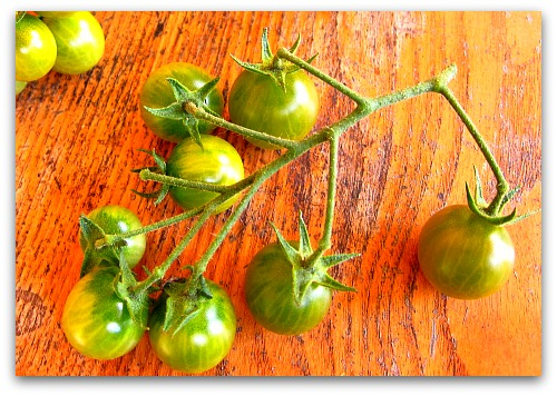 sweet green cherry tomatoes