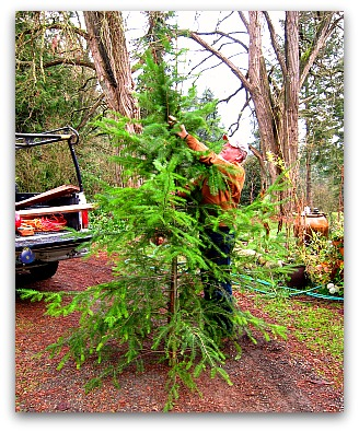 Christmas Past tree