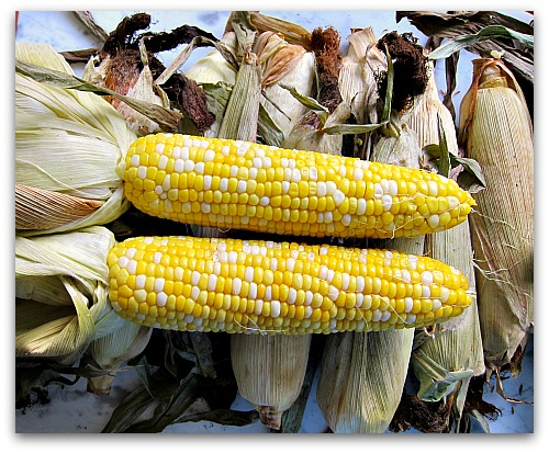 whole roasted ears of bicolored corn
