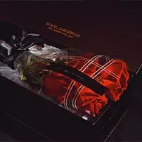 rose gift in a box royal albatross