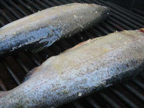 מניחים את הדגים