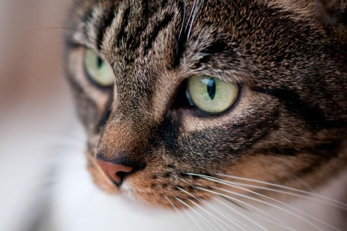 Kattenogen