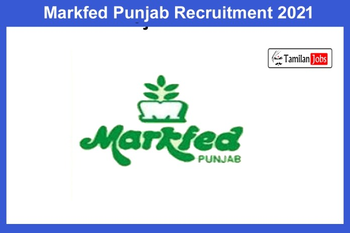 Markfed Punjab Recruitment 2021 Out – Apply Online 11 Assistant Manager Jobs