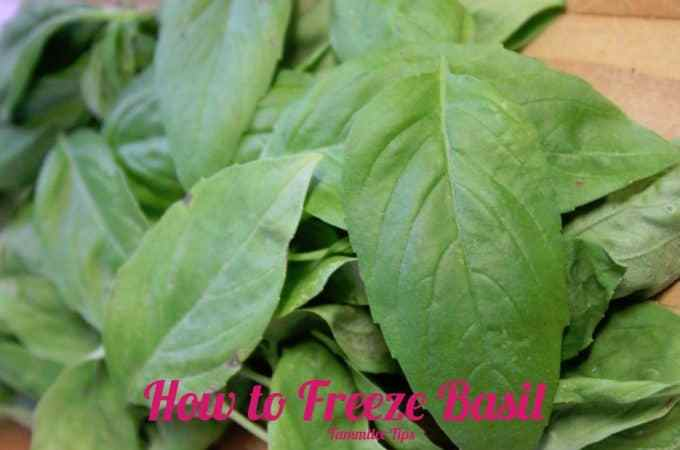 Freeze Basil now to enjoy it this winter