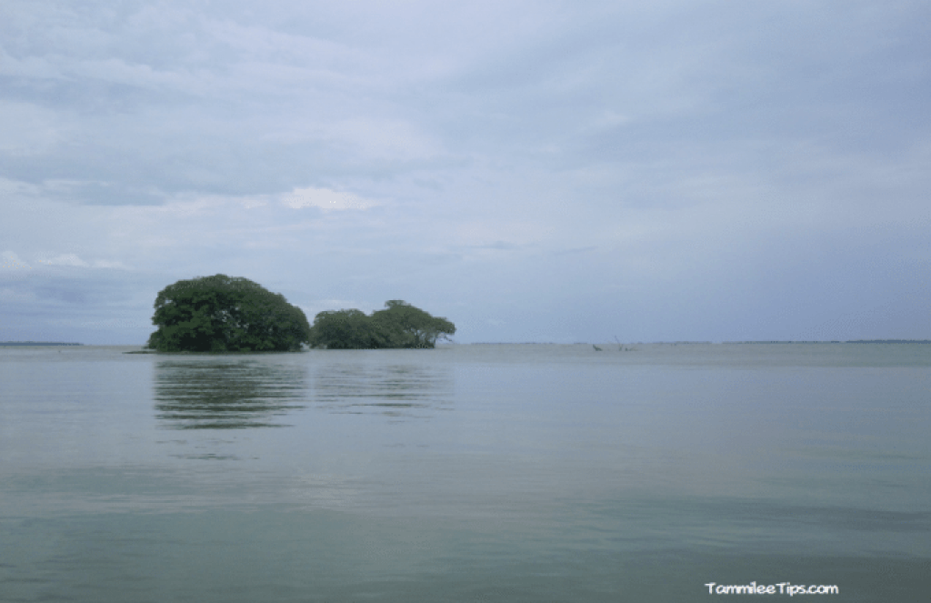 Belize-river-cruise-to-belize-City-marsh-area.png