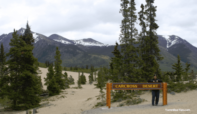 Golden-Princess-Skagway-Drive-to-Yukom-Carcross-Desert.png