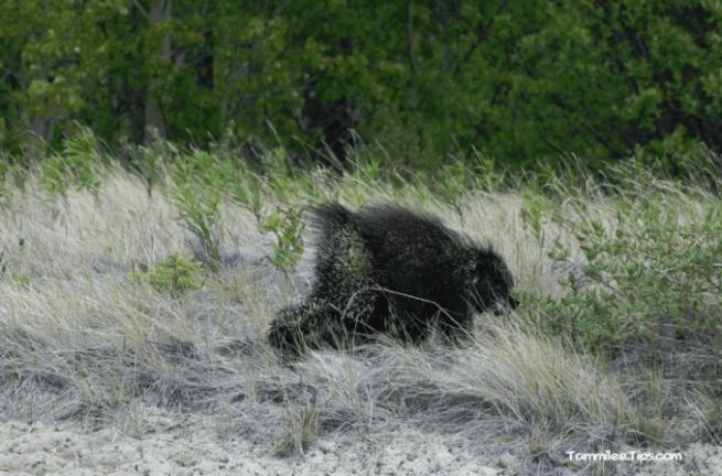 Golden-Princess-Skagway-Drive-to-Yukon-Porcupine.png