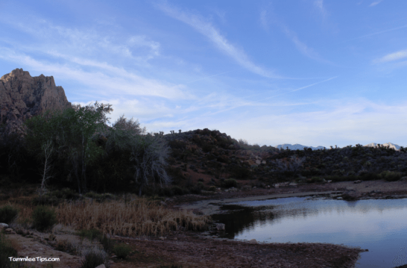 Spring-Mountain-Ranch-State-Park-Hiking-Area.png