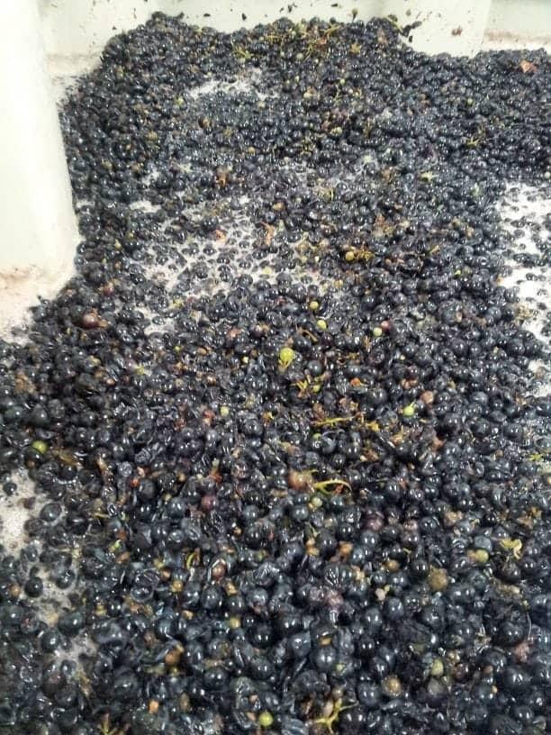 boise cinder wine grapes