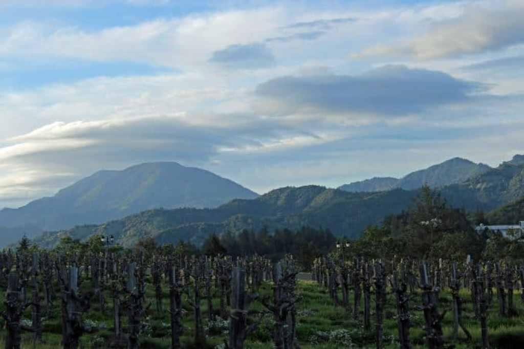 Castle Winery Vineyard
