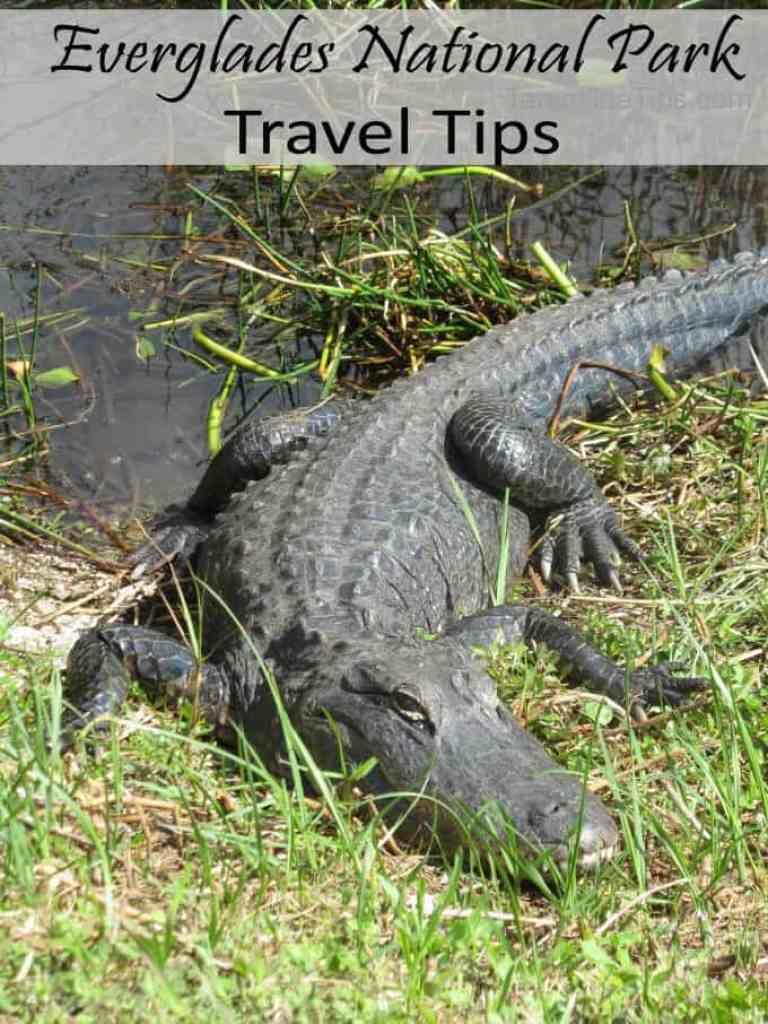 Everglades National Park Travel Tips