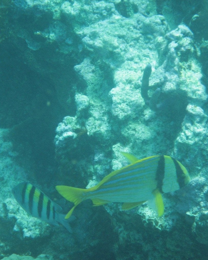 fish in Belize