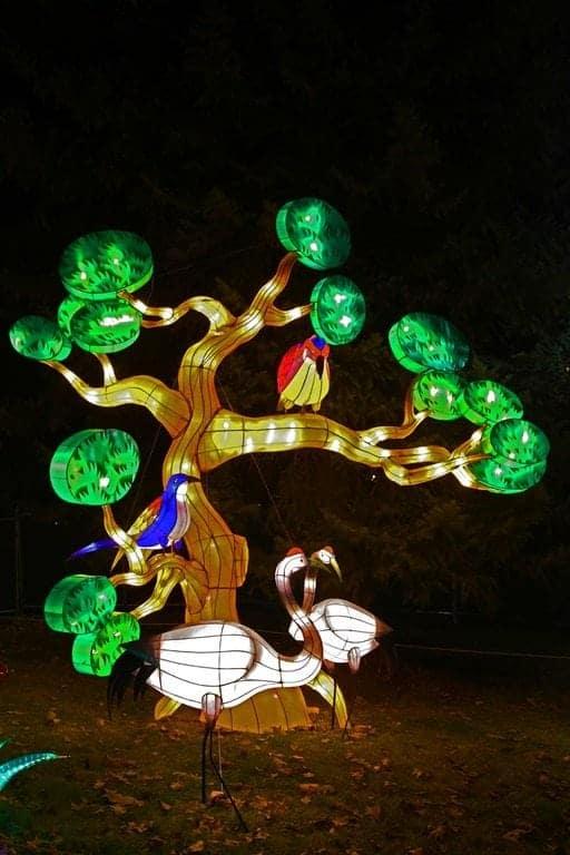 Birds-in-tree-at-Chinese-Lantern-Festival-Spokane.jpg