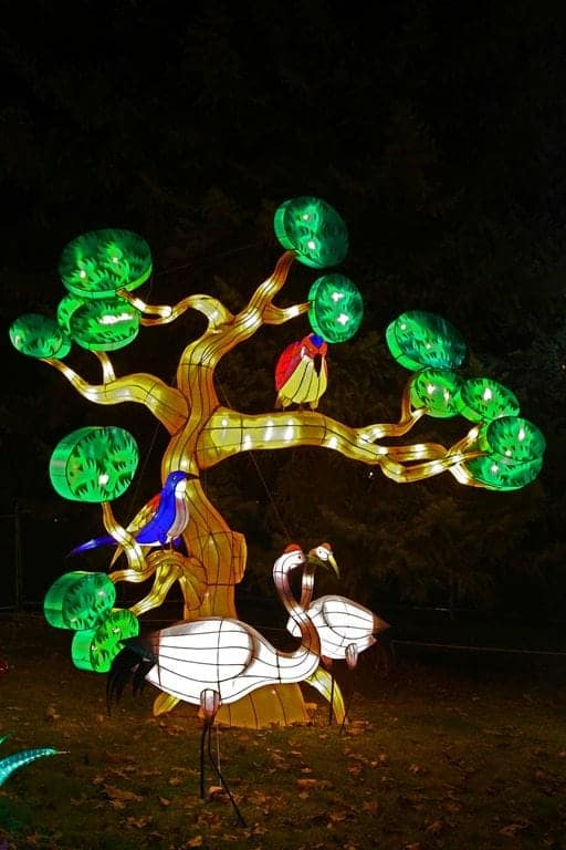 Birds-in-tree-at-Chinese-Lantern-Festival-Spokane.jpg