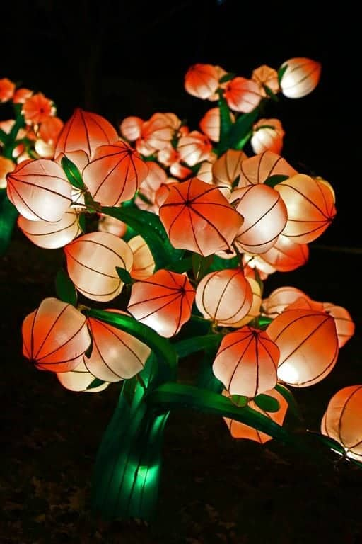 Cherry-Blossoms-at-Chinese-Lantern-Festival-Spokane.jpg