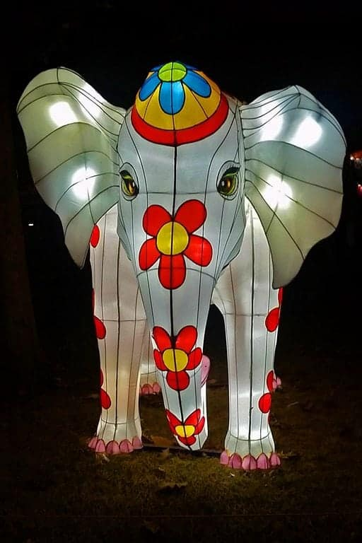 Elephant-at-Chinese-Lantern-Festival.jpg