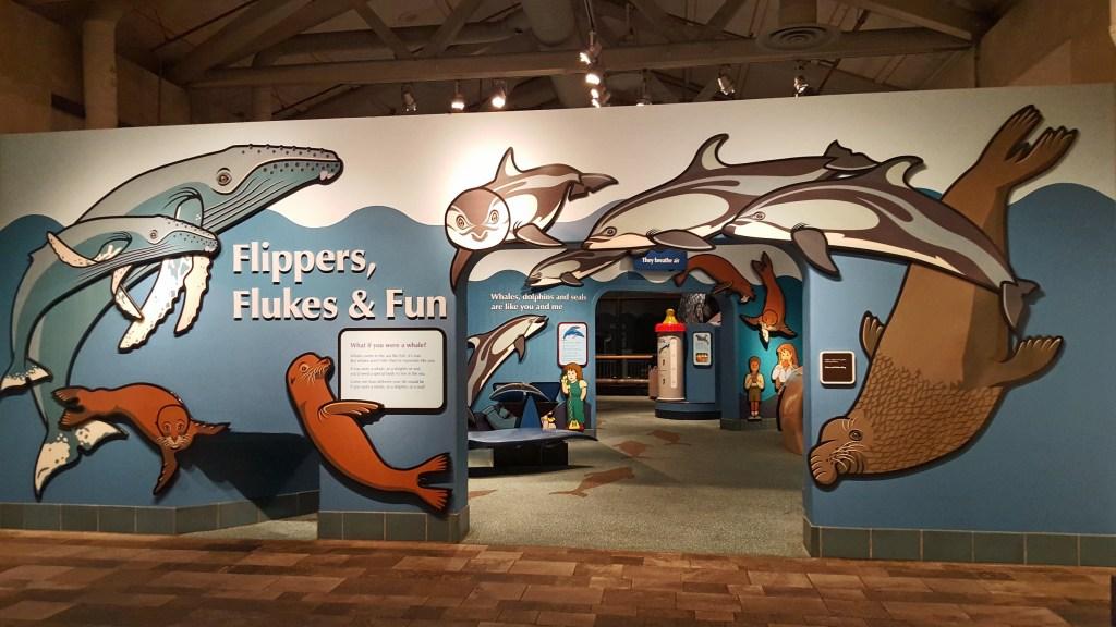 flippers flukes and fun at Monterey Bay Aquarium