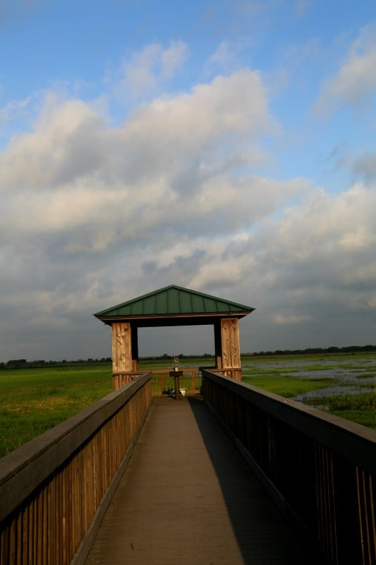 Creole Nature Trail Bird Overlook