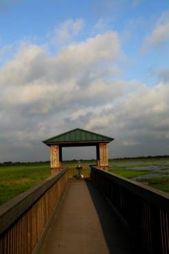 Creole Nature Trail Bird Overlook
