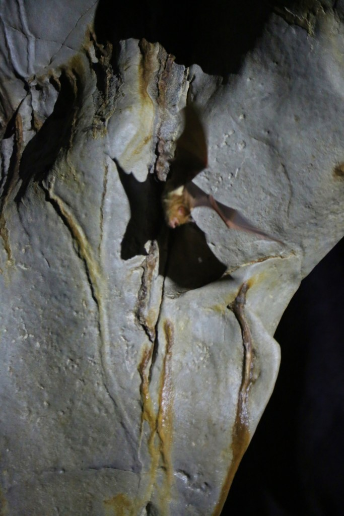 bat-taking-off-on-underground-cave-tour-philipines