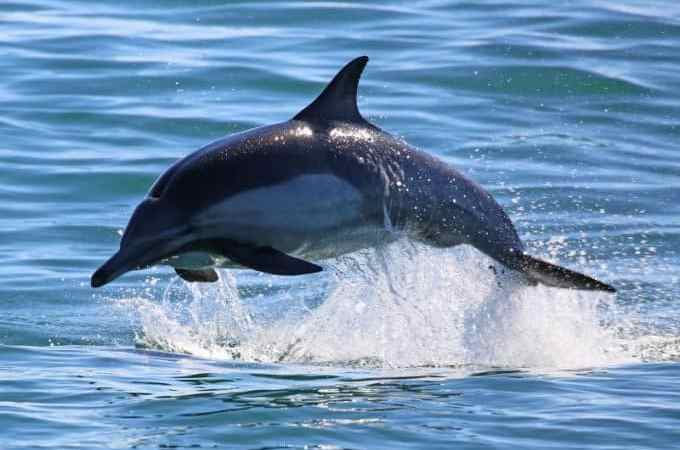 Amazing Wildlife Cruise with Island Packers to Channel Islands National Park