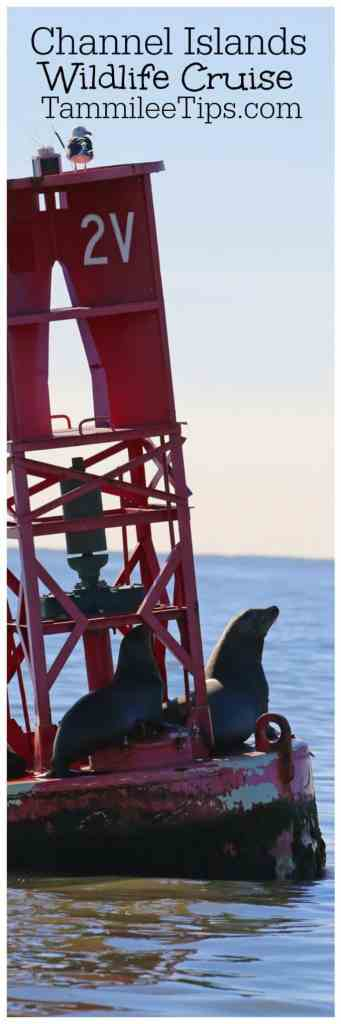 Channel Islands Wildlife Cruise with Island Packers is the perfect way to see dolphins, sea lions, and more off the California Coast from Ventura or Oxnard.