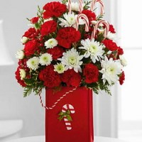 Holiday Cheers from Tammys Floral