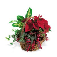 Holiday Planter Basket from Tammys Floral