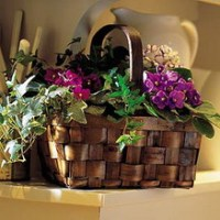 Mixed Africian Violet Basket from Tammys Floral