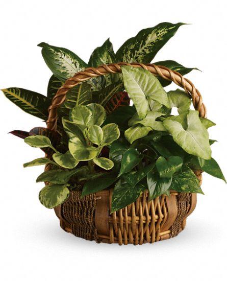 Emeral Garden Basket from Tammys Floral