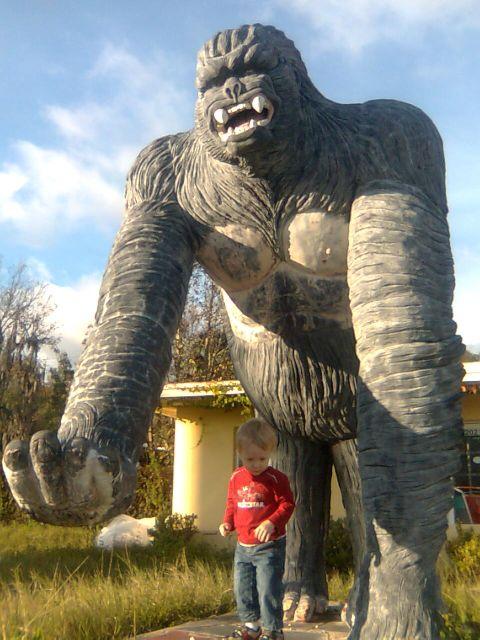 sallys-marek-gorilla