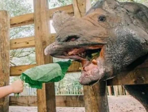 zoo tampa thanks community