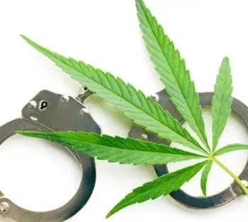 pot weed marijuana