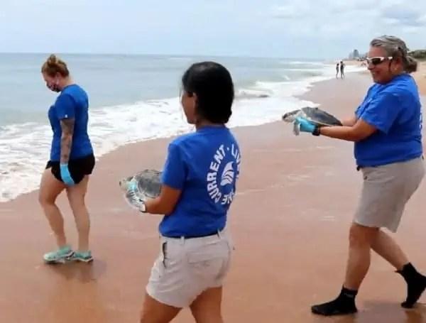 Sea Turtles Released