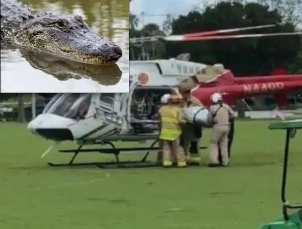 Bit By Gator After Falling Off of Bike