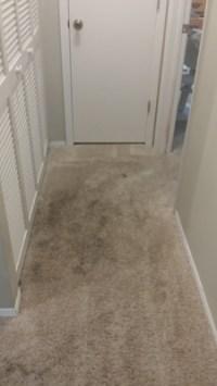 Carpet Cleaning Tampa FL