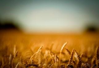 المنتجات الزراعية