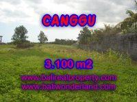 Tanah dijual di Canggu 31 Are View sawah di Canggu Batu Bolong Bali