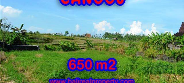 Tanah di Canggu Bali dijual 650 m2 View sawah di Canggu Batu Bolong