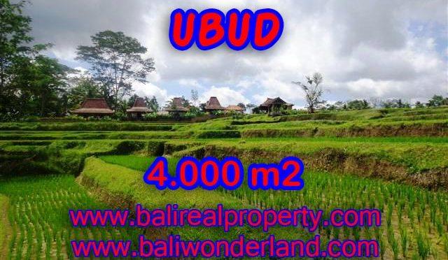 Tanah dijual di Bali 4.000 m2 view sawah dan sungai di Dekat sentral Ubud