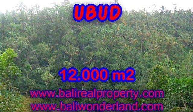 Tanah dijual di Ubud 12.000 m2 view tebing dan sungai di Ubud Payangan
