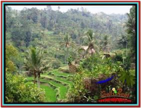 TANAH DIJUAL MURAH di UBUD Untuk INVESTASI TJUB520