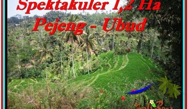 TANAH di UBUD DIJUAL 12,000 m2 di Ubud Tampak Siring