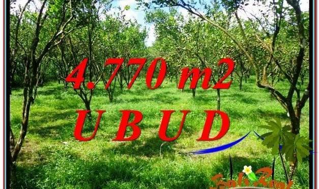 TANAH DIJUAL MURAH di UBUD Untuk INVESTASI TJUB598