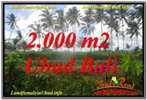 TANAH di UBUD DIJUAL MURAH 20 Are di Ubud Pejeng