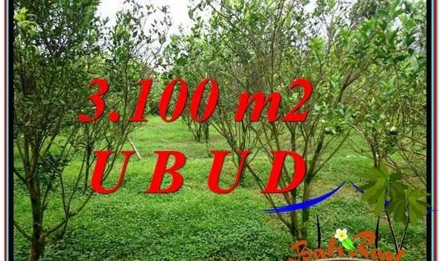 JUAL MURAH TANAH di UBUD 3,100 m2 View kebun