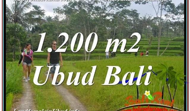 TANAH JUAL MURAH UBUD 1,200 m2 View Sawah