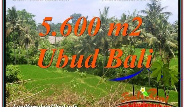 DIJUAL TANAH di UBUD BALI 56 Are di Sentral / Ubud Center