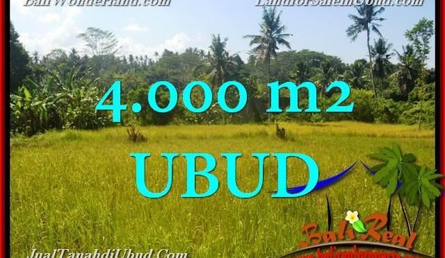 TANAH MURAH DIJUAL di UBUD BALI 40 Are di Ubud Gianyar