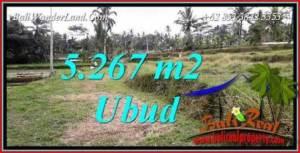 Dijual Murah Tanah di Ubud 53 Are di Ubud Tegalalang